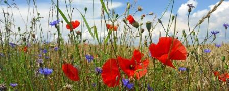 Gesunde Darmflora ist bunt wie eine Blumenwiese