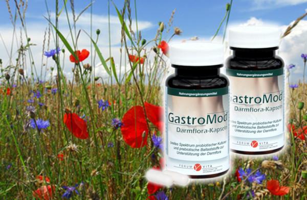 Gastro-Mod Kennenlernangebot